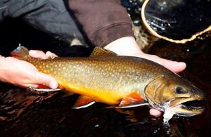 fishing-speckled-trout