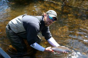 brook-trout-released
